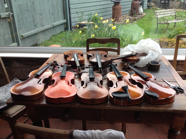 Violins ready for collection in Liverpool